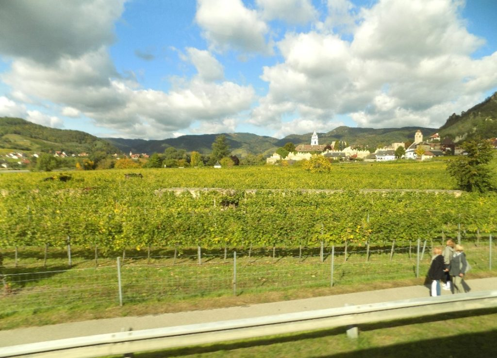 Vineyards of Austria